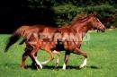 Poster Animali Cavallo con Puledro in Corsa