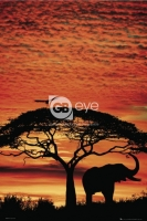 Poster Animali Natura Tramonto Africano