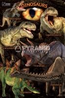 Poster Educativi e Scolastici I Dinosauri del Natural History Mu