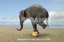 Poster Fotografico Natura e Animali Elefante sulla Palla