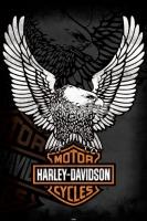 Poster Moto Logo Harley Davidson Eagle Aquila